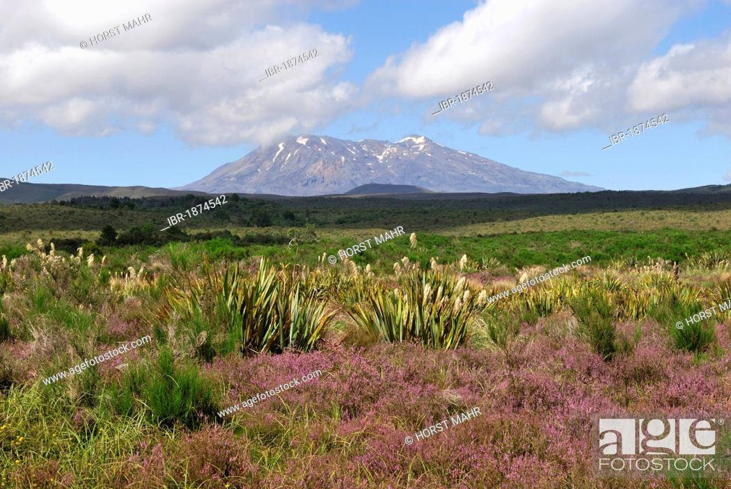 Stock Photo: Mount Ruapehu seen from State Highway 47, North Island, New Zealand.