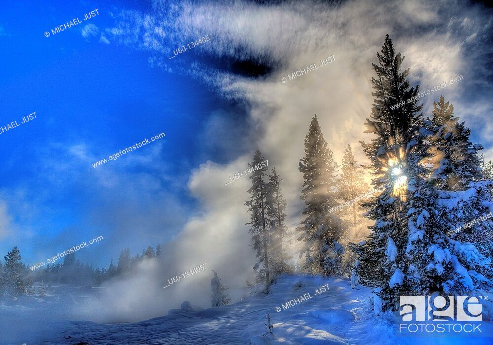 Stock Photo: Steam and sun envelope trees during the winter landscape at Yellowstone National Park, Wyoming.