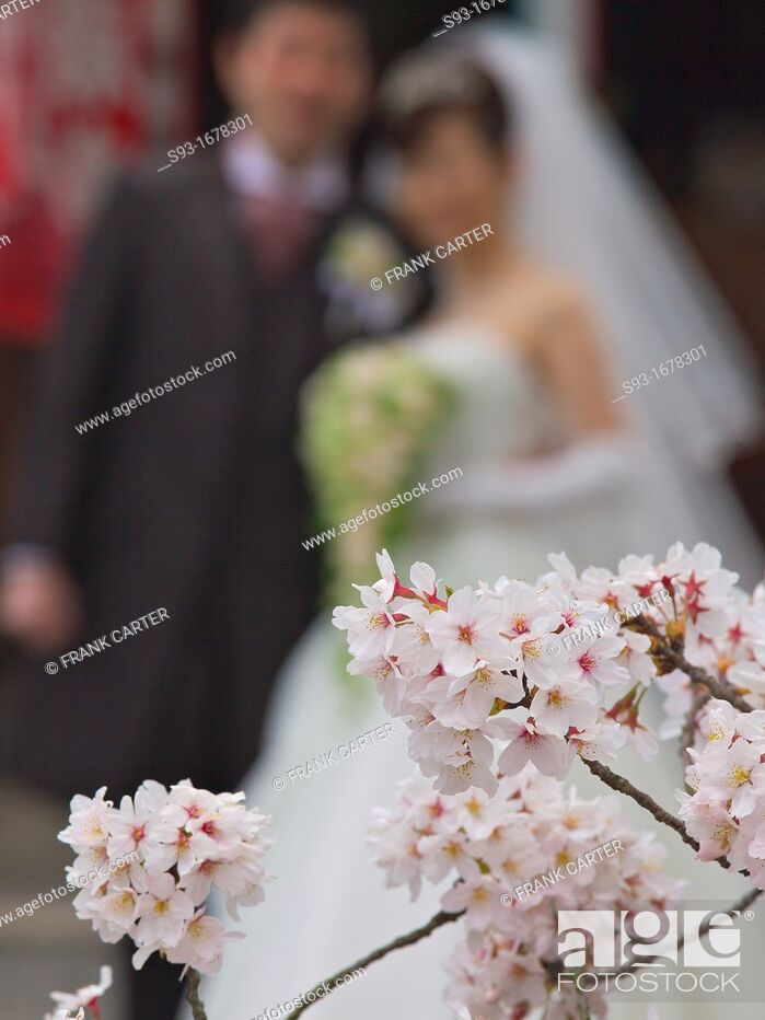 Stock Photo: A bride and groom posing on the Path of Philosophy Tetsugaku no Michi under the cherry blossoms.