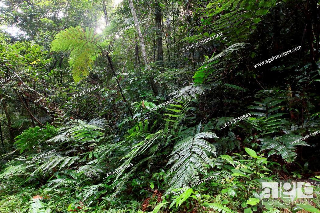 Stock Photo: Fern leaf in Tropical rain forest lanscape, mount matang, kuching, sarawak, malaysia, borneo.