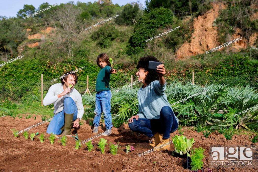 Stock Photo: Family taking selfies of planting lettuce seedlings in an vegetable garden.