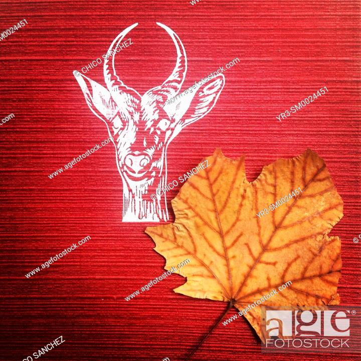 Imagen: A dry leaf found in a red book decorated with the head of a deer in Librero en Andanzas second-hand bookstore in Mexico City, Mexico.