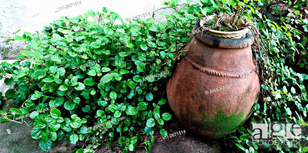 Stock Photo: Backyard, Miajadas, Cáceres, Extremadura, Spain.