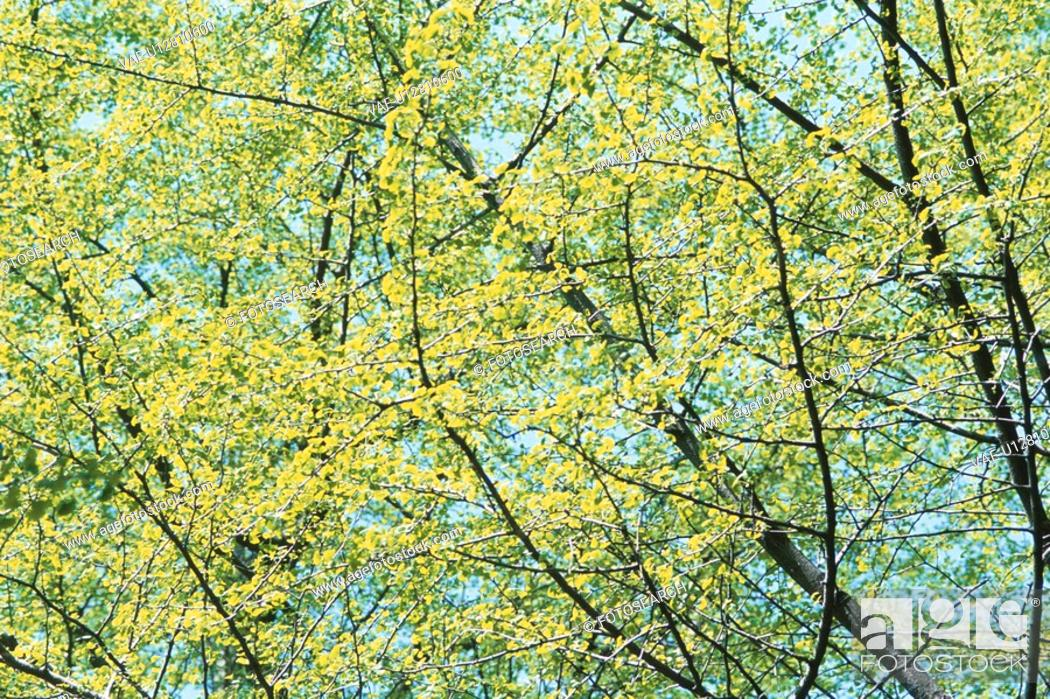 Stock Photo: Branches.