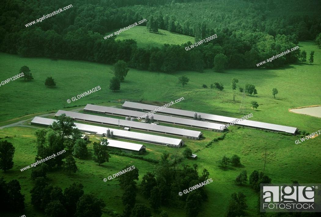 Stock Photo: Chicken farm, Tennessee.