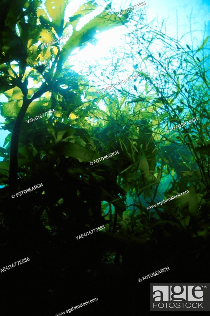 Stock Photo: Sea Weed.