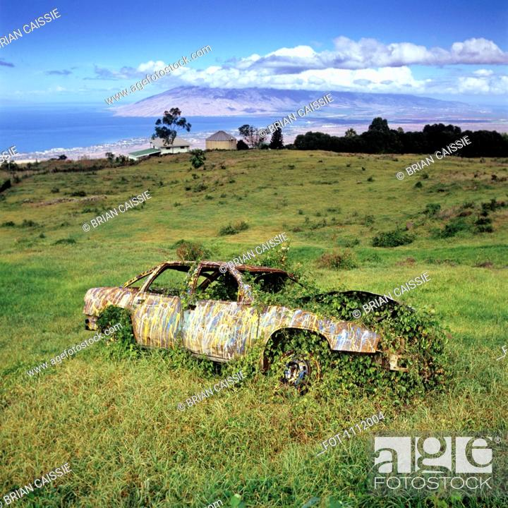 Stock Photo: An abandoned car with ivy growing in and around it.
