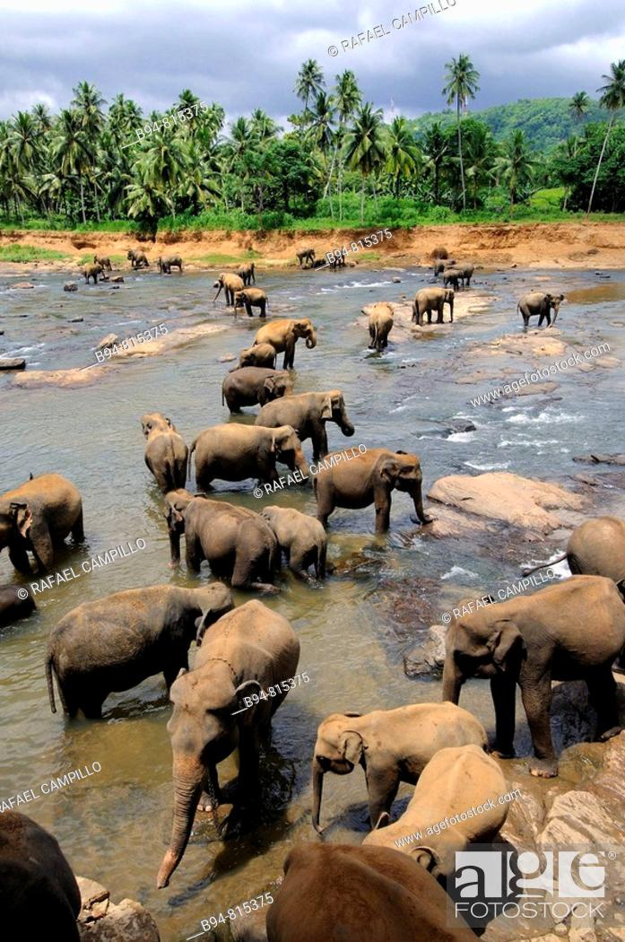 Stock Photo: Elephant orphanage, Pinnawala, Sri Lanka.