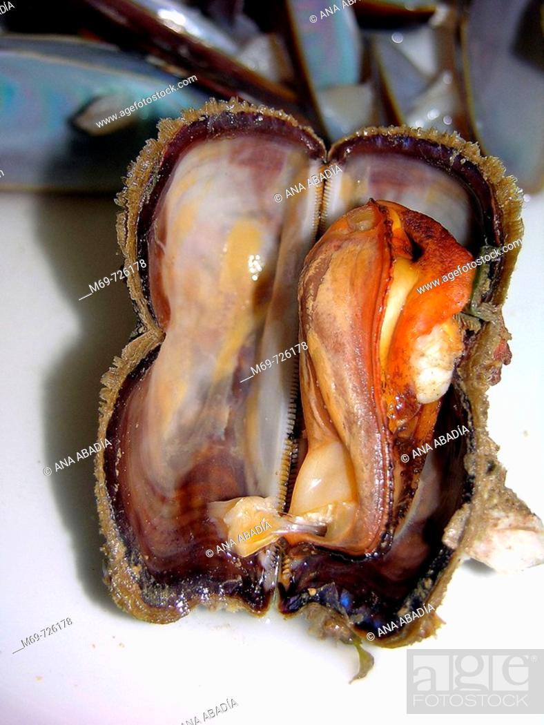 Stock Photo: Ark clam.