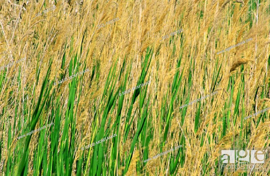 Stock Photo: Meadow.