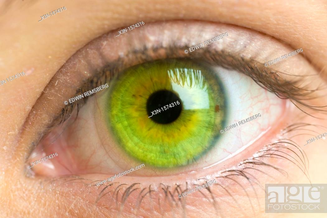 Stock Photo: Close up of female green eye.