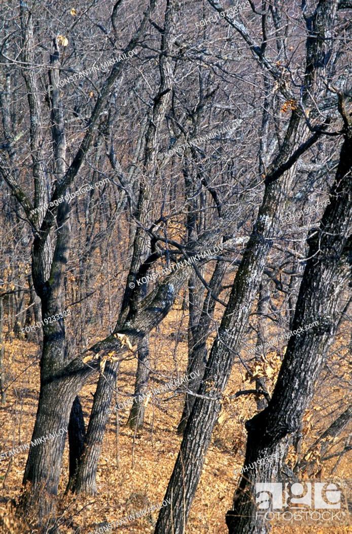 Stock Photo: East Siberia, Eatern Siberia, Siberia, flora, forest, nature.