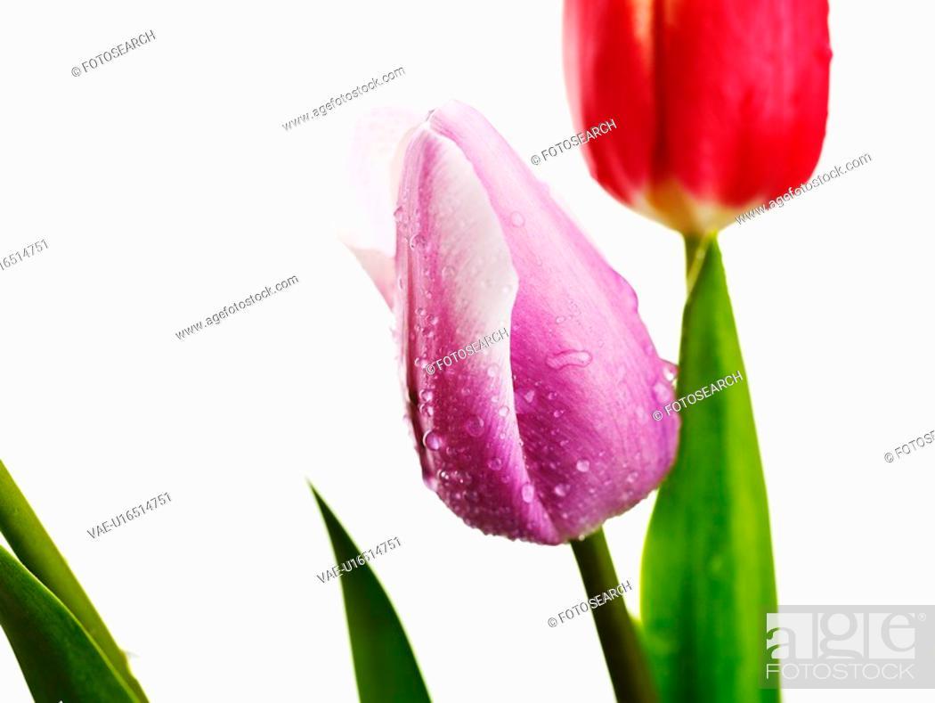 Stock Photo: goods, spring, fancy, waterdrop, dewdrop, decoration, season.
