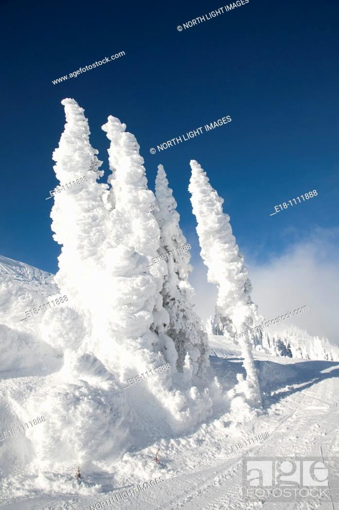 Stock Photo: Canada, BC, Sun Peaks Ski Resort  Ice and snow covered trees at the top of the mountain.