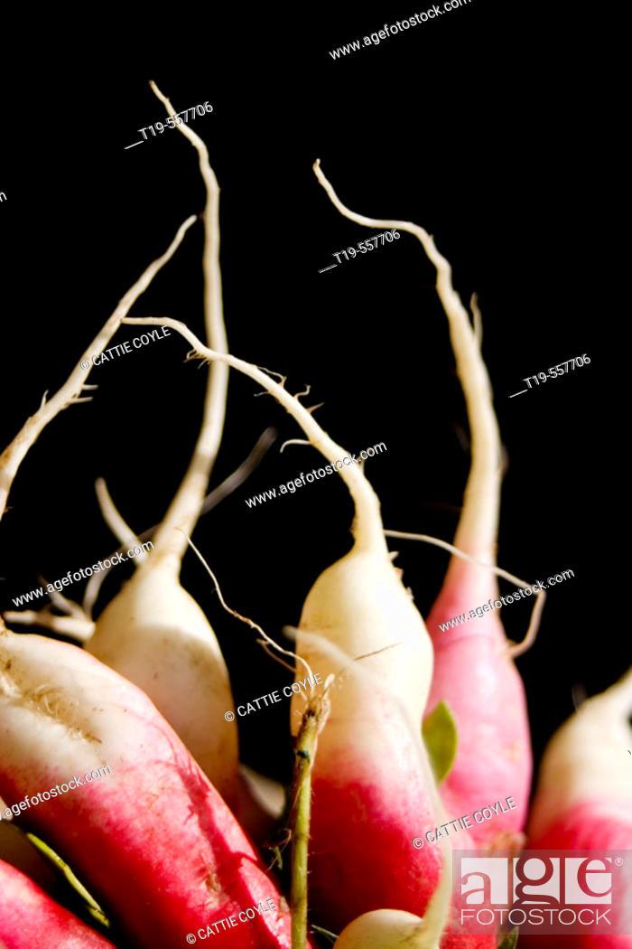 Stock Photo: Radishes (Raphanus sativus L.).