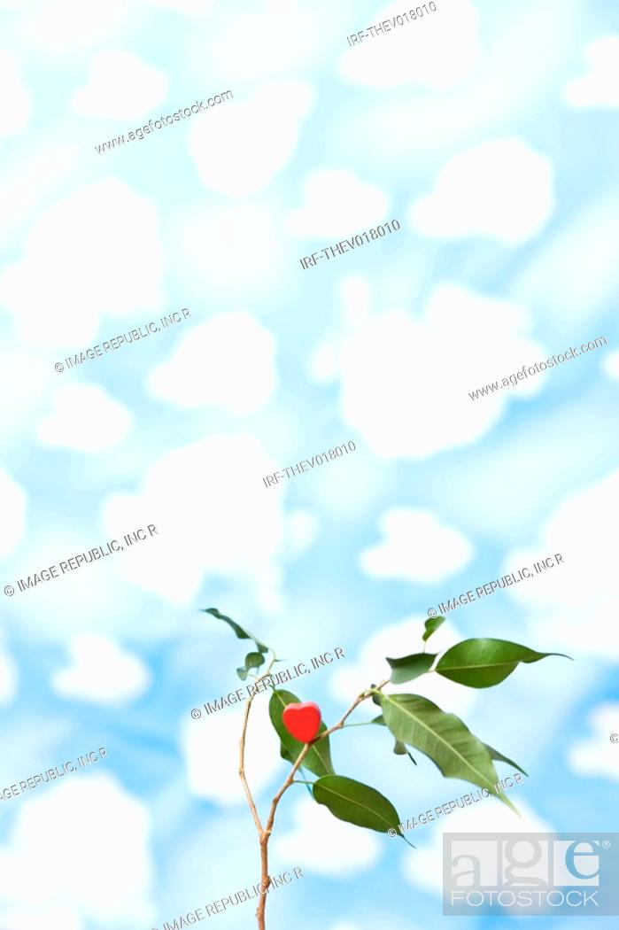 Stock Photo: wallpaper and heart shape on bough.