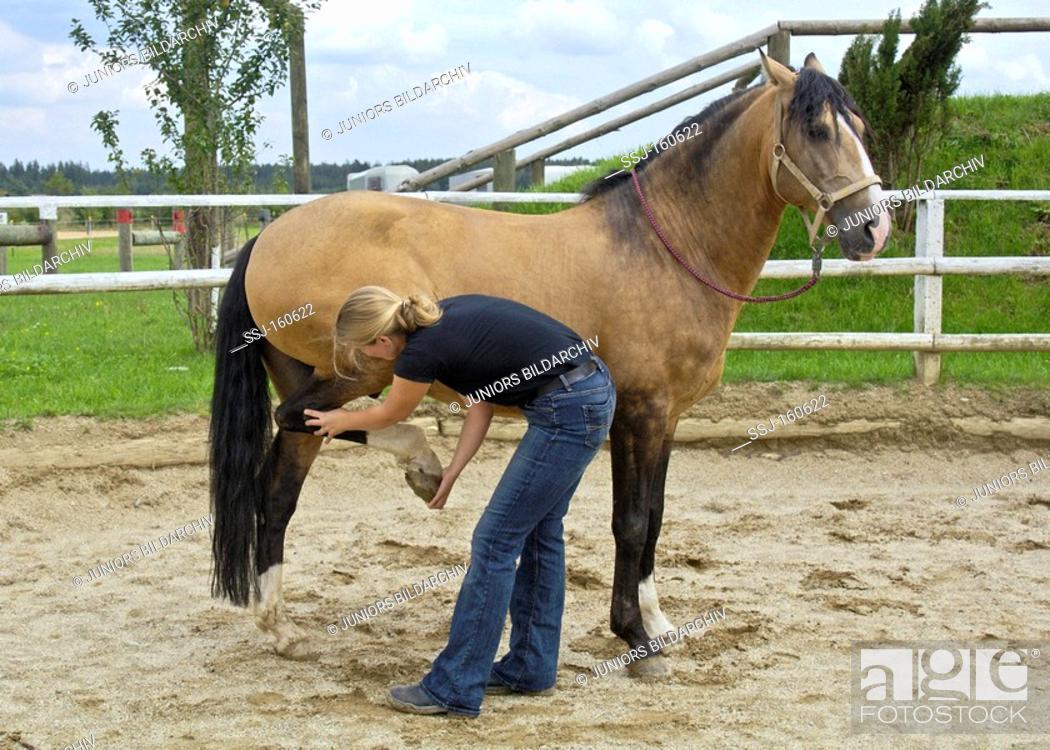 Stock Photo: veterinary: Lusitano horse - Manual therapy.