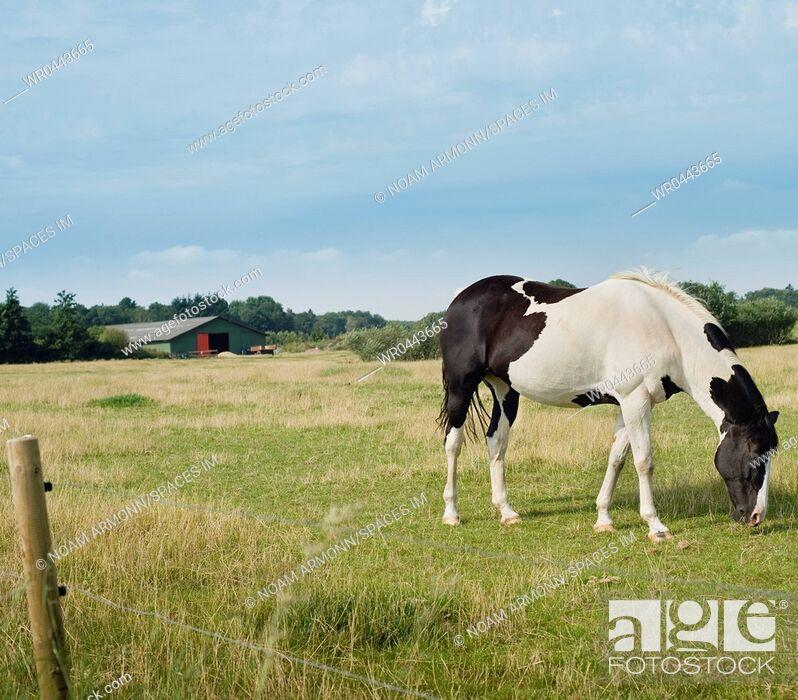 Imagen: Horse Grazing in Meadow.
