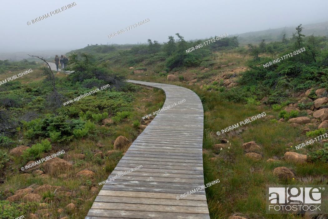 Stock Photo: Boardwalk at Division No. 9, Subd. A, Gros Morne National Park, Newfoundland And Labrador, Canada.