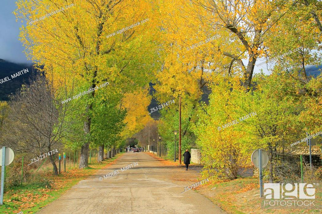 Stock Photo: Many trees coloured by Autumn flank the road leading from the monastery of El Paular to the man made river pools of Las Presillas.