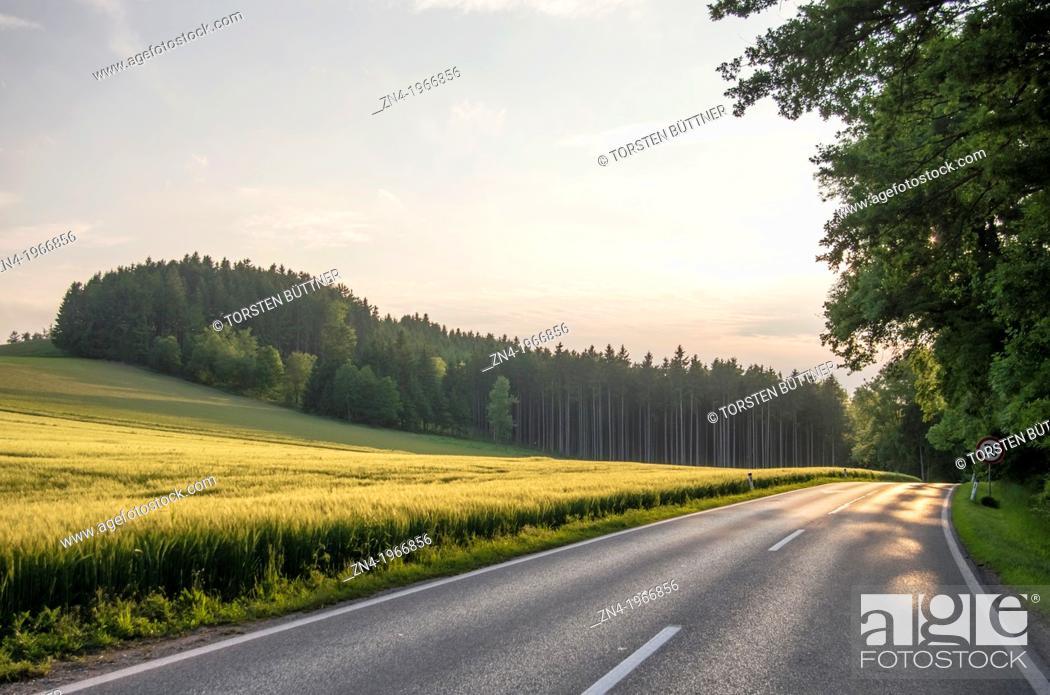 Stock Photo: Country Road Passes Wheat Field at Sunset near Bad Schallerbach, Upper Austria, Austria.