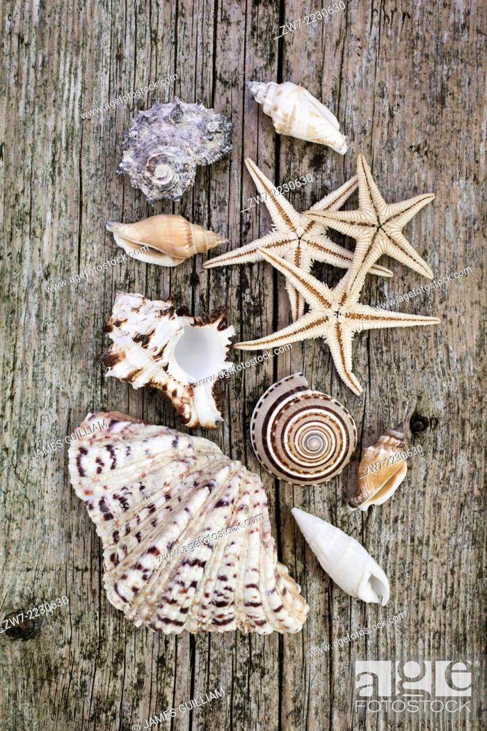 Photo de stock: Sea shells and starfish on rustic timber decking.