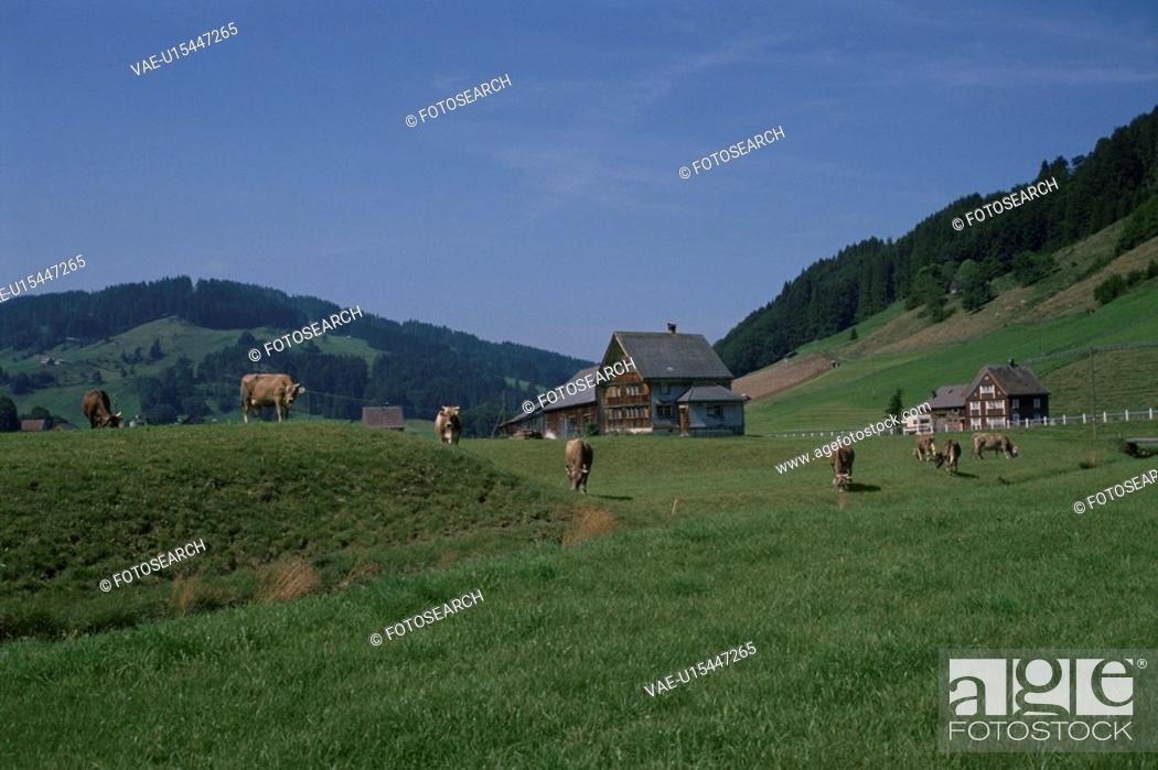 Stock Photo: Cows And Green Forest In Switzerland.
