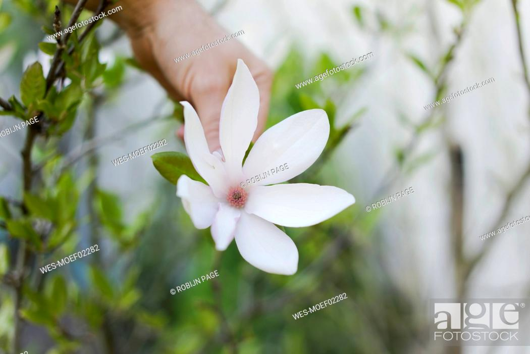 Stock Photo: Close-up of man with blossom in garden.