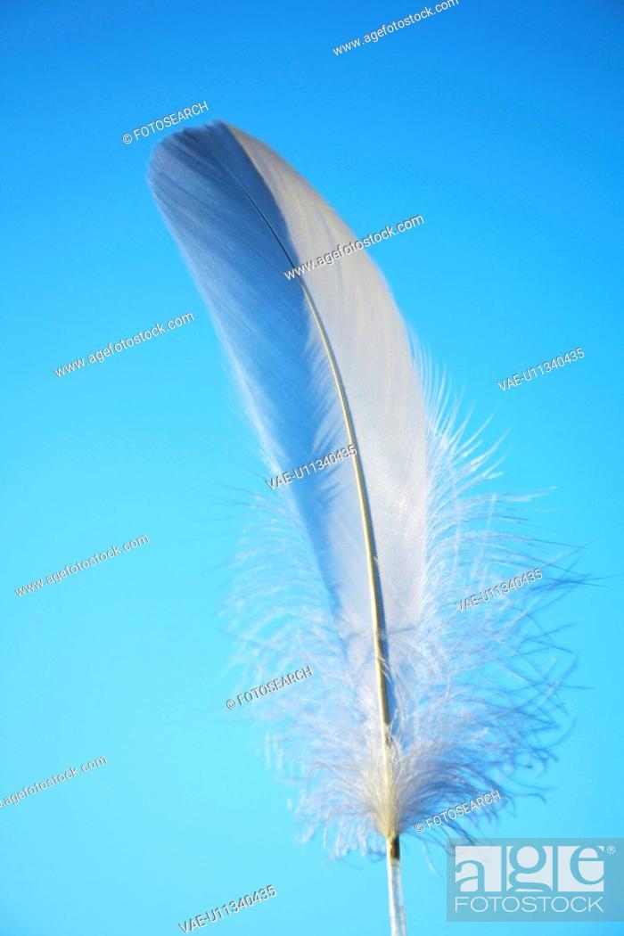 Stock Photo: Feather.