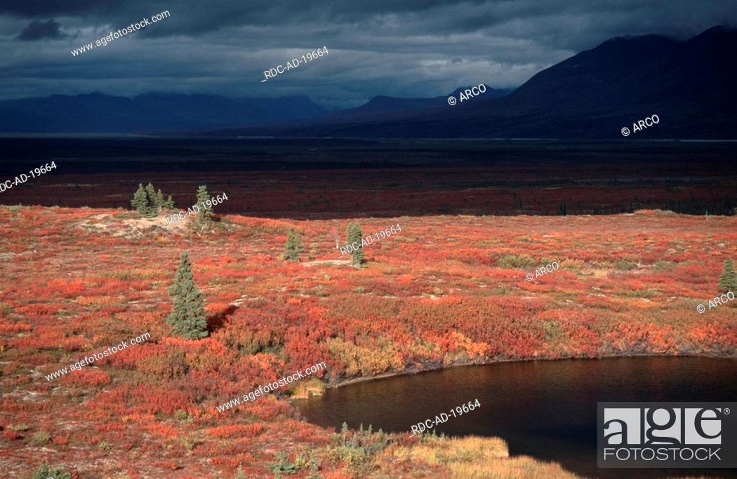 Photo de stock: Tundra in autumn Alaska Range Alaska USA.
