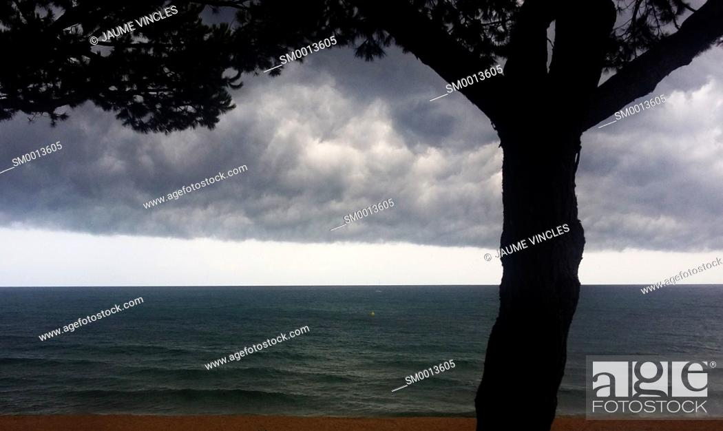 Stock Photo: Silhouette of tree, storm clouds and horizon over sea. Caldes d'Estrac, Barcelona Province, Spain.