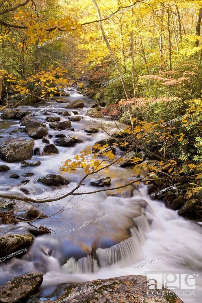 Stock Photo: Autumn, Tremont, Great Smoky Mountains National Park, TN.