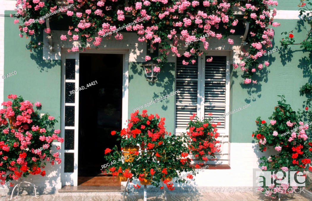 Flower pots in front of house asturia spain flower decoration
