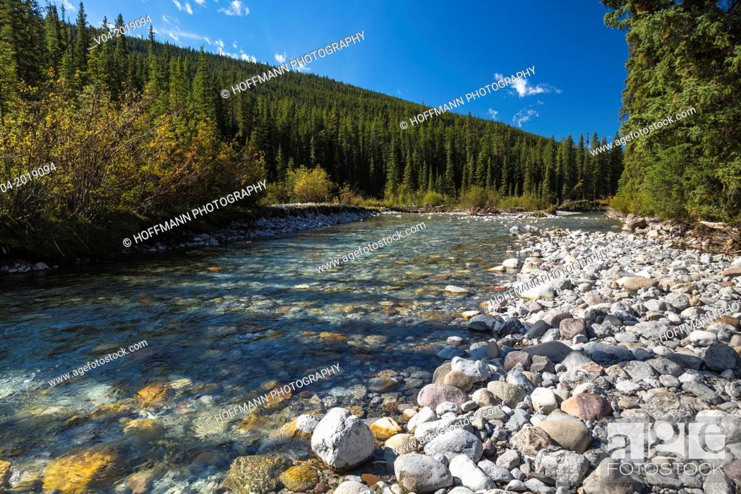 Stock Photo: Athabasca River and forest in the Jasper National Park, Alberta, Canada.
