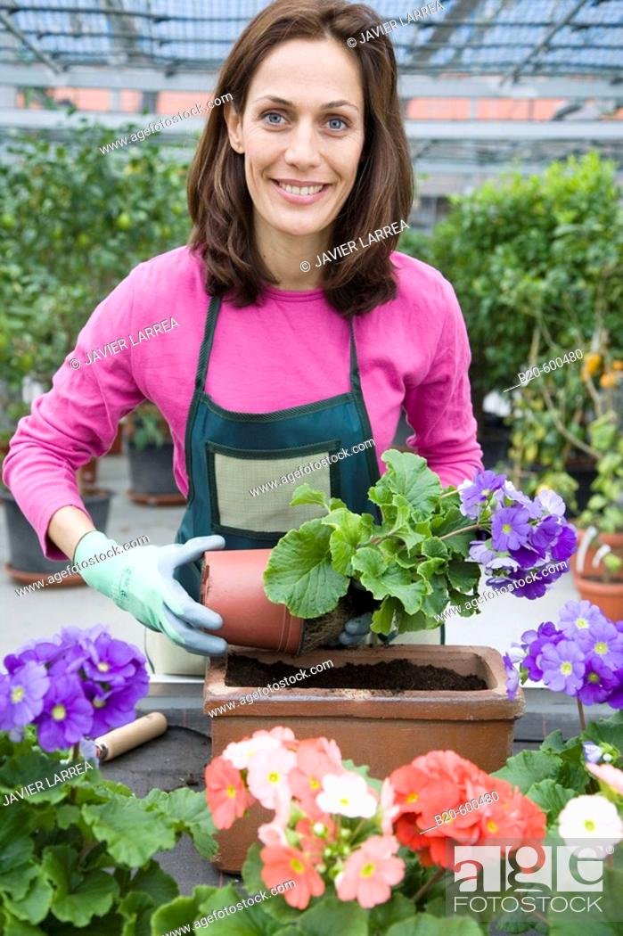 Imagen: Gardener transplanting flower pots. Garden, Tree nursery. Gipuzkoa, Euskadi. Spain.