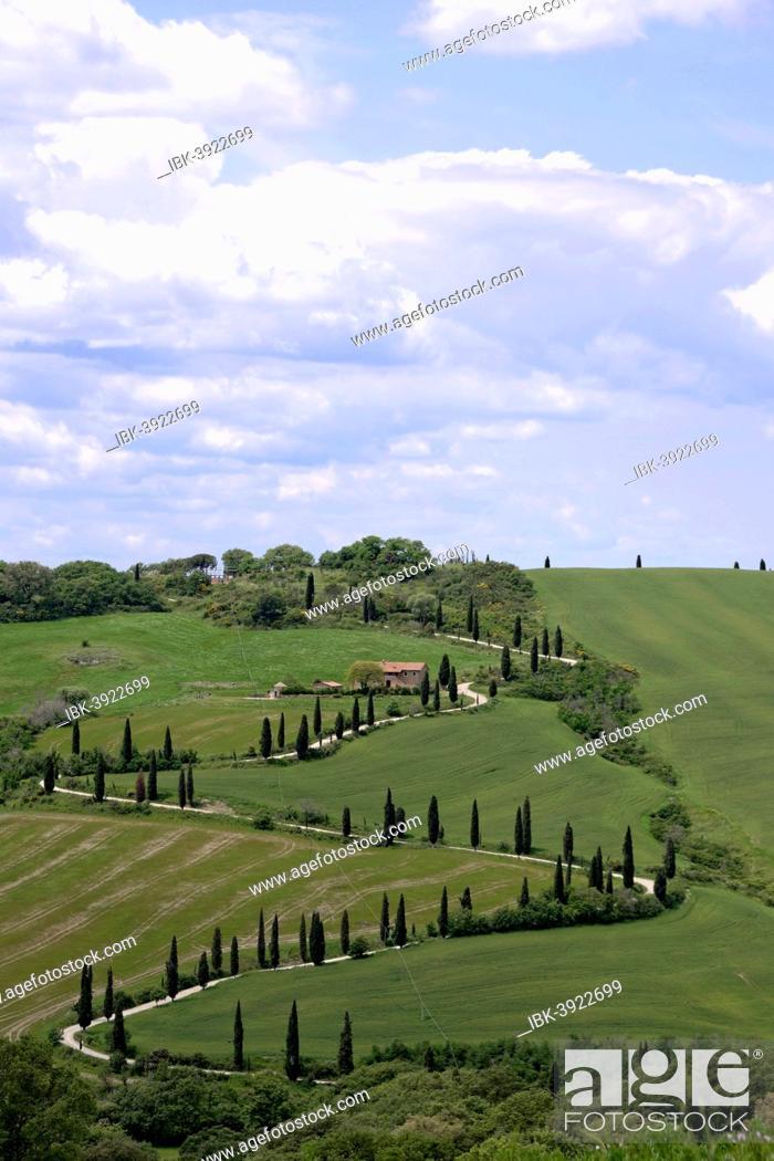Stock Photo: Cypress avenue of La Foce, Tuscany, Italy.