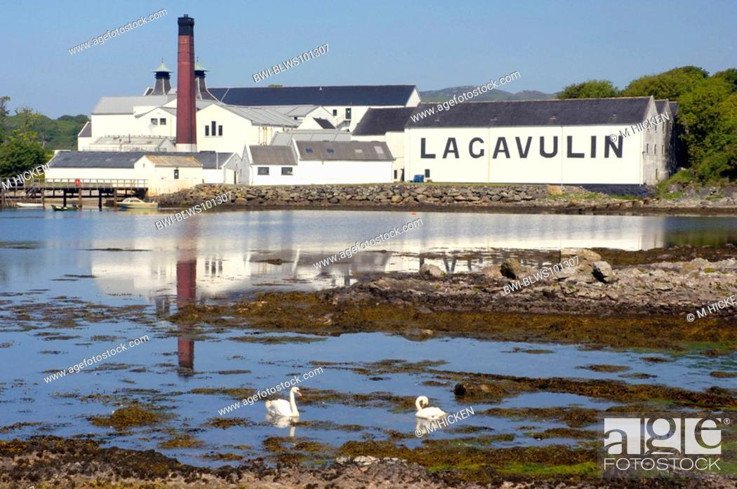 Imagen: Lagavulin distillery, United Kingdom, Scotland, Islay.