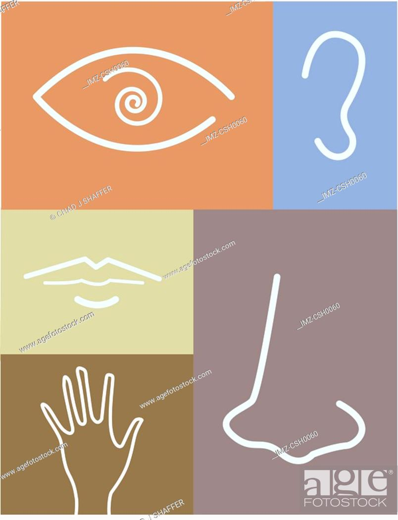 Stock Photo: An illustration of body parts representing the five senses.