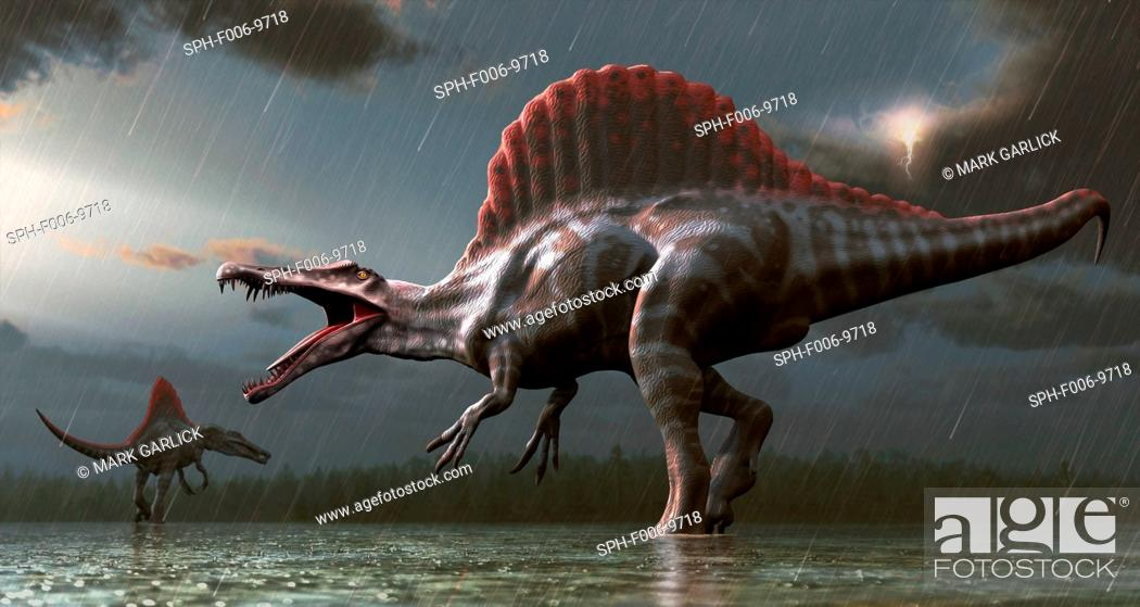 Stock Photo: Spinosaurus (meaning 'spine lizard') was arguably the largest known meat-eating dinosaur. It was longer even than Tyrannosaurus and Giganotosaurus at.