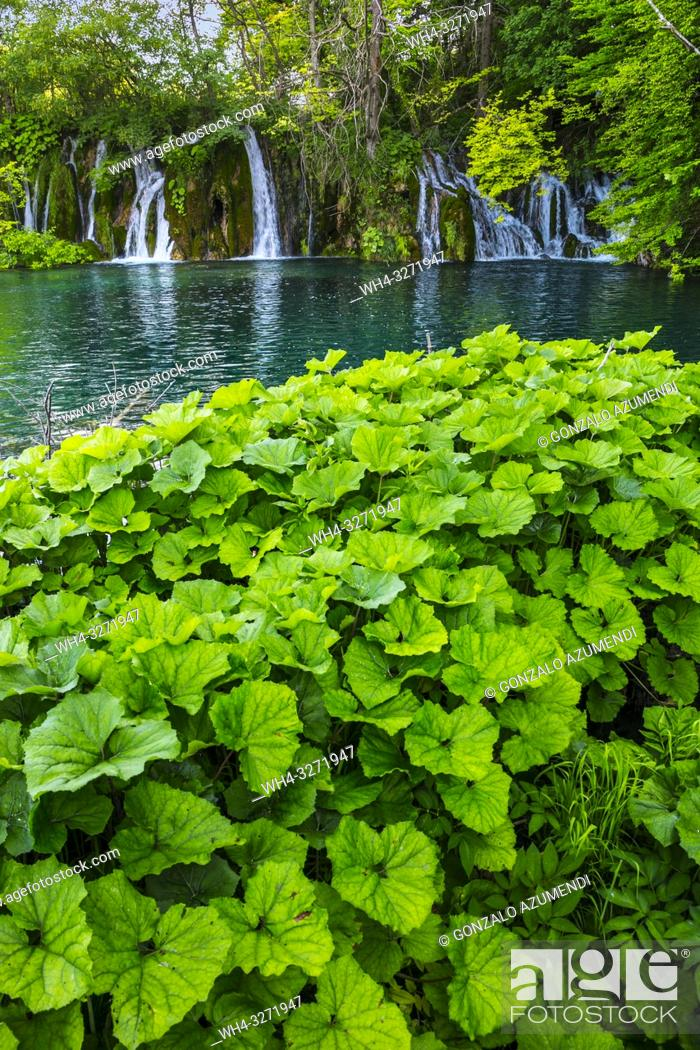 Stock Photo: Plitvice Lakes National Park. Lika Plješivica mountain range . The park falls within two counties Lika-Senj and Karlovac.
