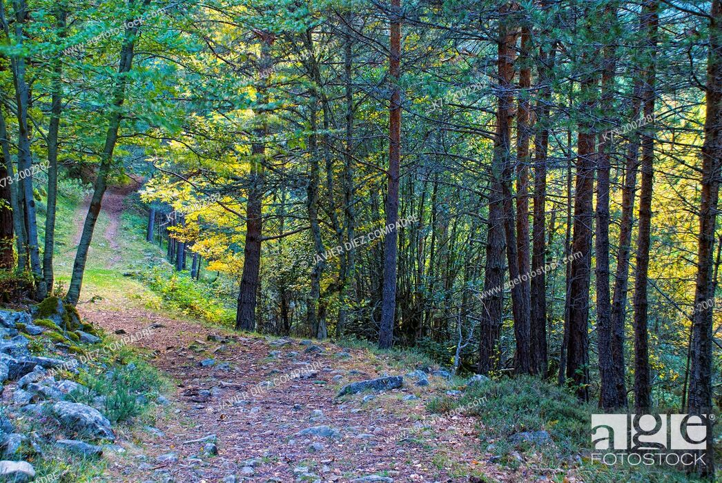 Stock Photo: Forest. Puente Ra Path. Sierra Cebollera Natural Park. Villoslada de Cameros. Logroño Province, La Rioja. Spain.