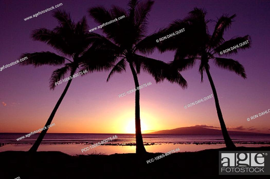 Stock Photo: Hawaii, Palm trees silhouetted by purple and yellow sunset sky over ocean.