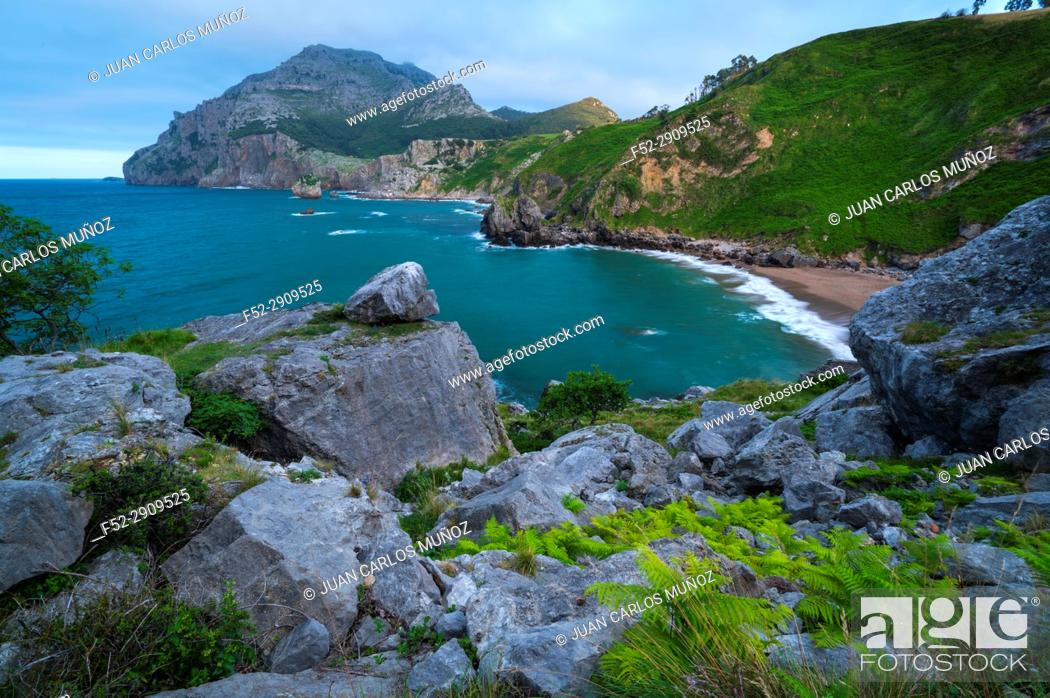 Stock Photo: Ferns, San Julian beach, Mount Candina, Cantabrian Sea, Liendo valley, Cantabria, Spain, Europe.