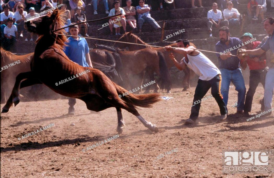 Stock Photo: 'Rapa das bestas', local festival. La Franqueira. Pontevedra province. Spain.