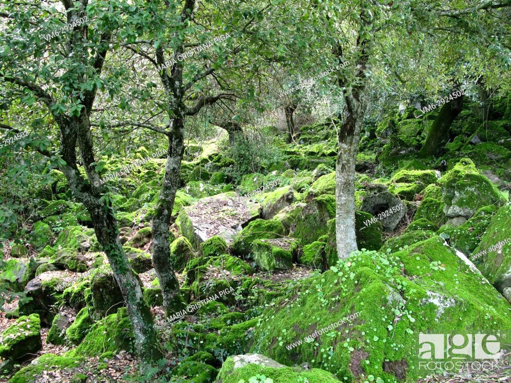Stock Photo: Trees covered in moss in Giara di Gesturi, Sardinia, Italy.