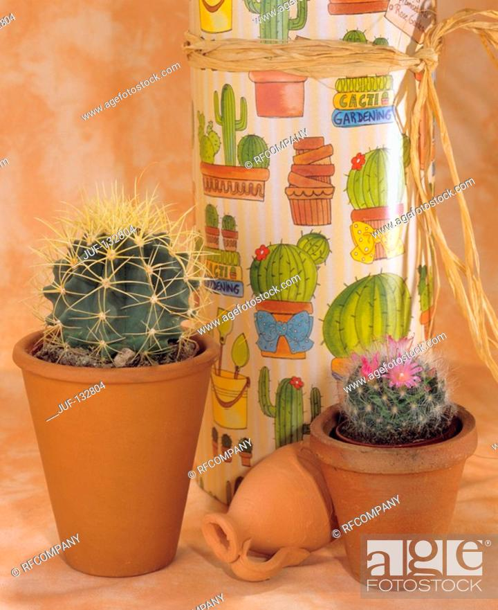 Stock Photo: two different cacti.