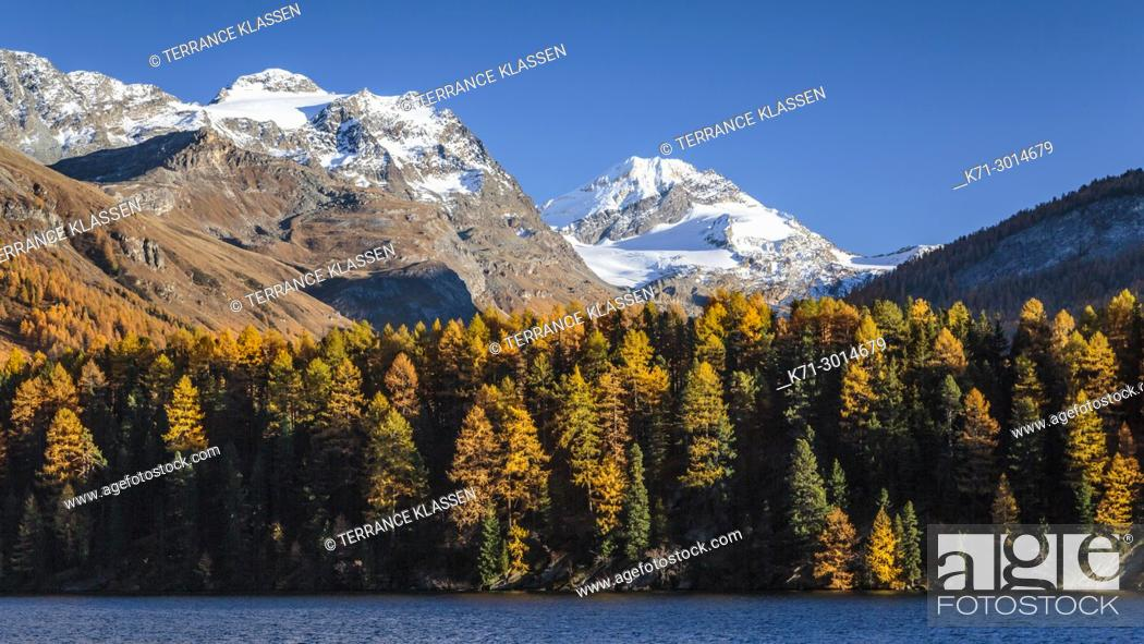 Stock Photo: Swiss alps mountains with larch trees in the autumn season near the Julier Pass, Switzerland, Europe.