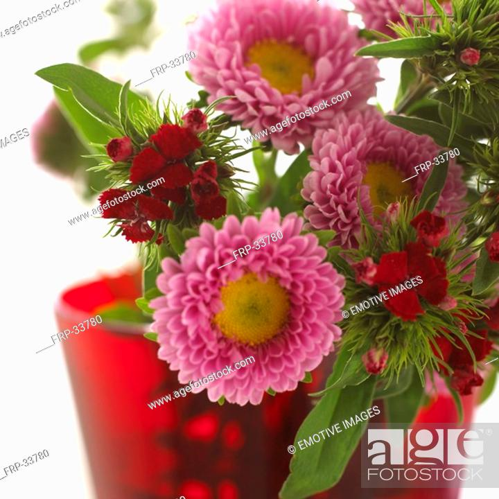 Stock Photo: Bunch of aster and sweet Williams.