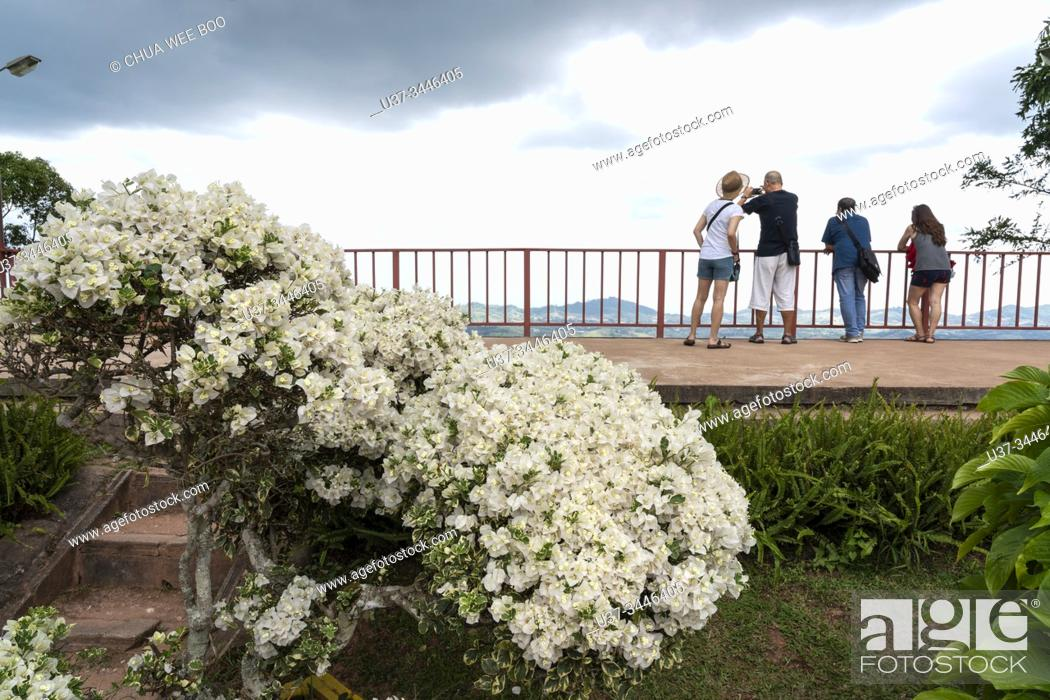 Stock Photo: Bougainvillea or paper flower in the garden of Weapon Museum, Khao Kho, Phetchabun, Thailand.