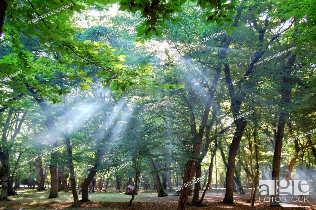 Stock Photo: Sun in forest.